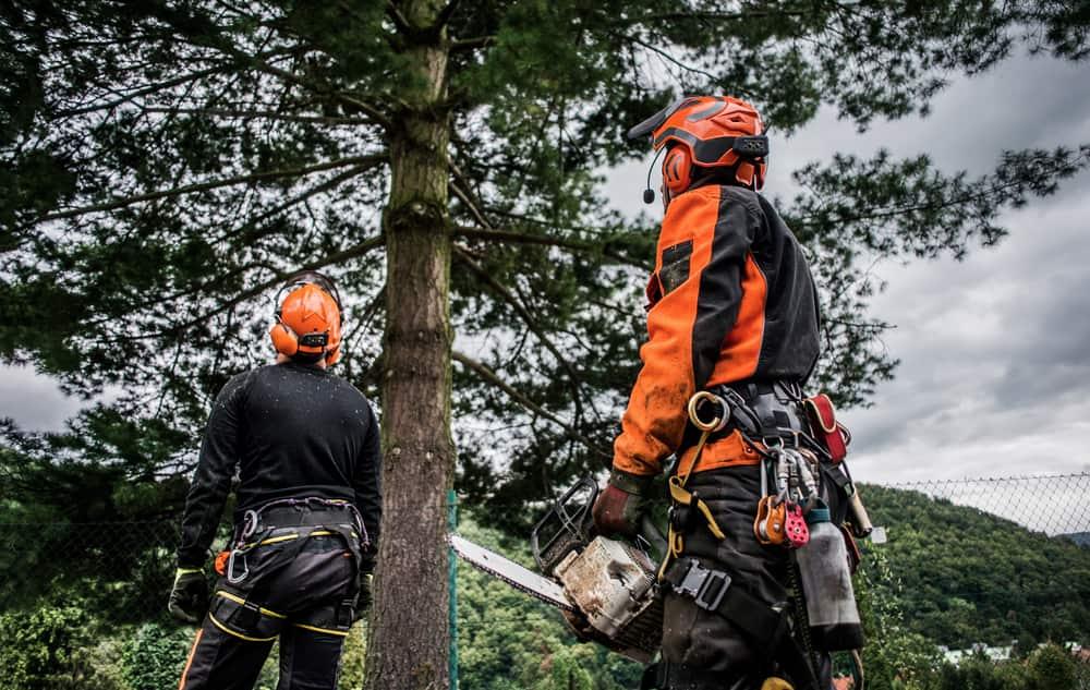 Choosing the Right Tree Service Company (2)