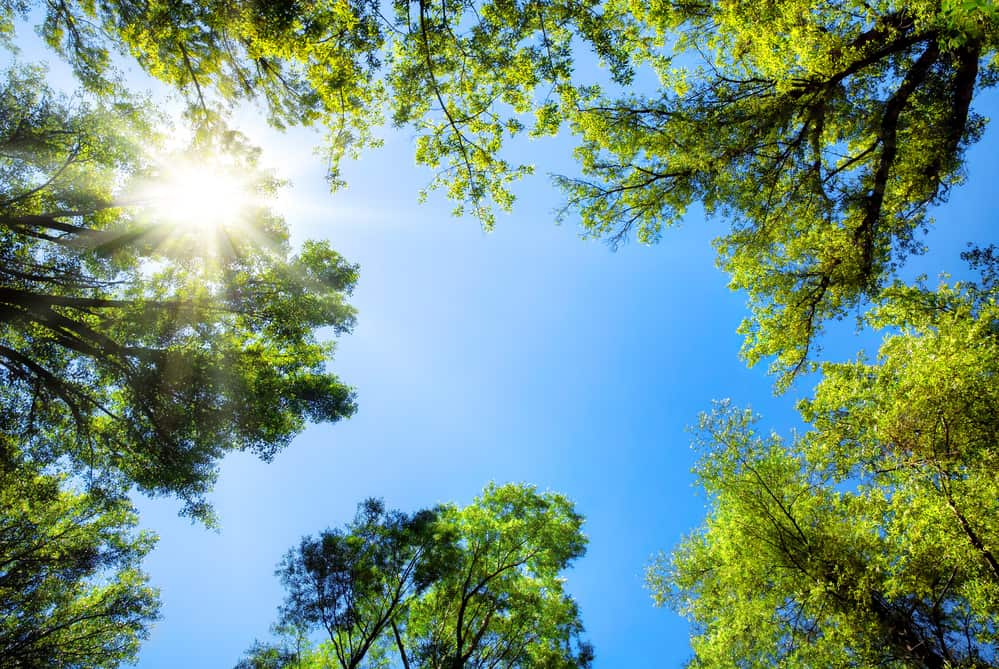 Summer Time Tree Care tips and trends